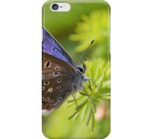 Common Blue - Polyommatus icarus iPhone Case/Skin