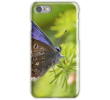 Common Blue - Polyommatus icarus iPhone Case/Skin