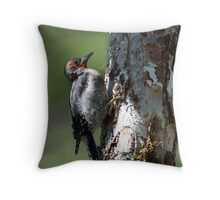 Juvenile Red-breasted Sapsucker Throw Pillow