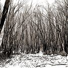 Lost in the Frosty Forest by Natasha M