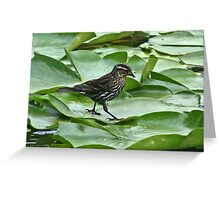 Walking On A Lilly Pad Greeting Card