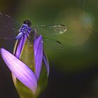 Wings of a Dragonfly by jesskato