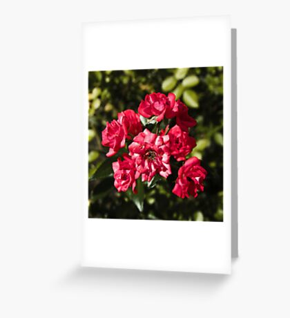 Summer Miniatures Greeting Card