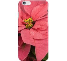 Christmas Greetings with a Vivacious Pink Poinsettia iPhone Case/Skin