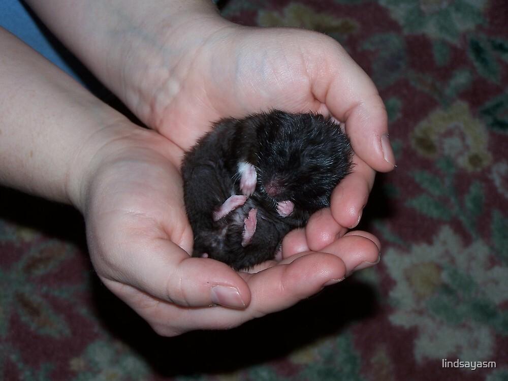 Hamster Dreams by lindsayasm