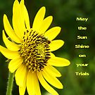 Sunflower Card by Susan Blevins