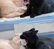 Dueling Yawns,,...My Yawn IS Bigger Than Yours. by MaeBelle
