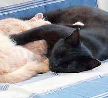 Snoozing Buddies...Real Swingers by MaeBelle