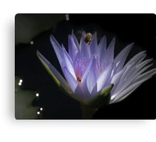 B hovering above the lilly Canvas Print