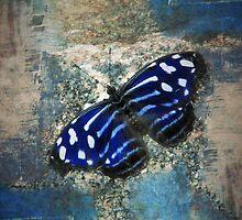 Butterfly Blues by LisaSBaker