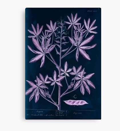 A curious herbal Elisabeth Blackwell John Norse Samuel Harding 1739 0082 Lupin Inverted Canvas Print
