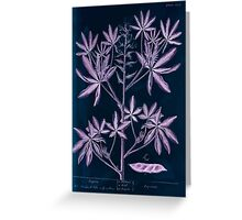 A curious herbal Elisabeth Blackwell John Norse Samuel Harding 1739 0082 Lupin Inverted Greeting Card