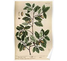 A curious herbal Elisabeth Blackwell John Norse Samuel Harding 1737 0494 The Cork Tree Poster