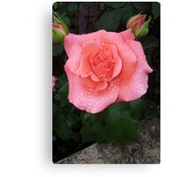 The Rose After The Storm Canvas Print