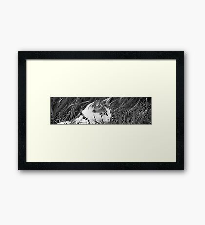 A Slice of Life Framed Print