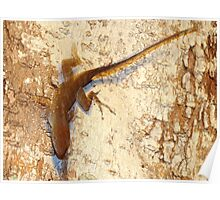 Lizard and matching bark Poster