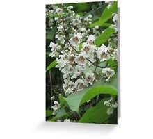 Indian Bean Tree Blossom Greeting Card