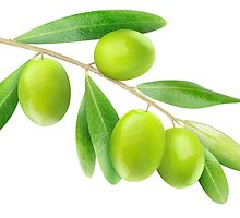 Branch with green olives by 6hands
