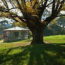 Old Elm Tree in Berwick by Aleksander