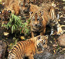 Tiger Bath by WendyJC