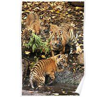 Tiger Bath Poster