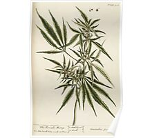 A curious herbal Elisabeth Blackwell John Norse Samuel Harding 1739 0182 The Female Hemp Poster