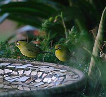 Two little birds by Brian Edworthy