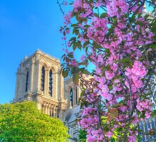 Blossoms at the Dame by Michael Matthews