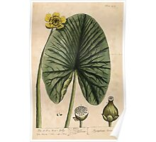 A curious herbal Elisabeth Blackwell John Norse Samuel Harding 1739 0620 The Yellow Water Lilly Poster