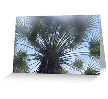 frond-dazzling Greeting Card