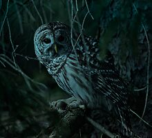 Barred Owl _ Pseudo Night shot by Michael Cummings