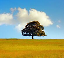 One Tree Hill by Quentin  Croft
