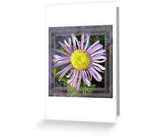 Close Up Lilac Aster With Bright Yellow Centre Greeting Card