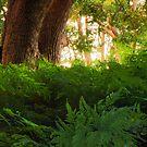 Fern Forrest by Quentin  Croft