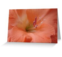 Dreamily Soft and Peachy........ Greeting Card