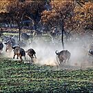 Cape Buffalo Stampede by ten2eight
