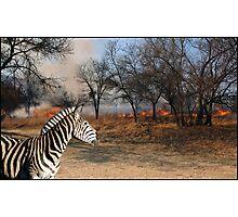 Zebra and Bush Fire Photographic Print