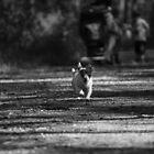 make a run for it. by elladoor