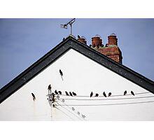 Birdie! Photographic Print