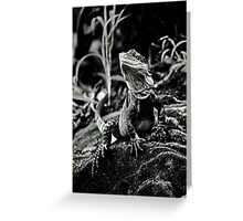 Water Dragon - Manly Greeting Card