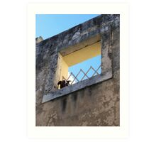 Alfama Dog Looking Out Of A Hole In The Wall Art Print