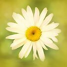 Wild Daisy'... by Valerie Anne Kelly