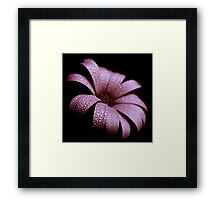 dusty pink Framed Print