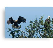 Bald Eagle Parents Canvas Print