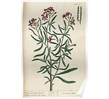 A curious herbal Elisabeth Blackwell John Norse Samuel Harding 1737 0464 White Stock July Flower Poster