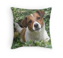 Jack Russel - waiting to play by Haley of alwaysbeautiful Throw Pillow