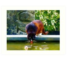 Cat Drinking In Picturesque Garden Art Print