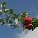 Apples in the Sky, No Diamonds by Monnie Ryan