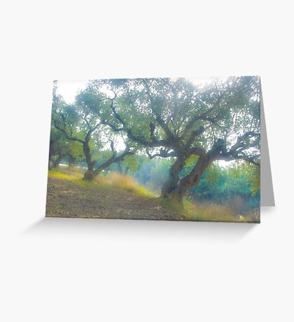 Views 3954***Olive trees. Zakintos. Greece. by Doctor Andrzej Goszcz.   Thanks  friends !!! Featured in Avant~Garde Art . Thanks !  Greeting Card