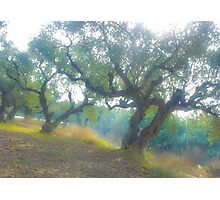 Views 3954***Olive trees. Zakintos. Greece. by Doctor Andrzej Goszcz.   Thanks  friends !!! Featured in Avant~Garde Art . Thanks !  Photographic Print
